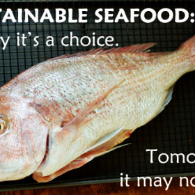 Thumbnail image for Sustainable Seafood: A Call to Action