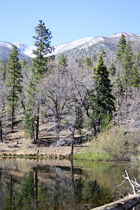 Jenk's Lake
