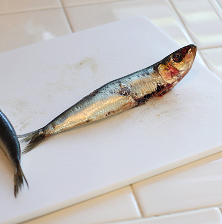 Fresh sustainable sardines