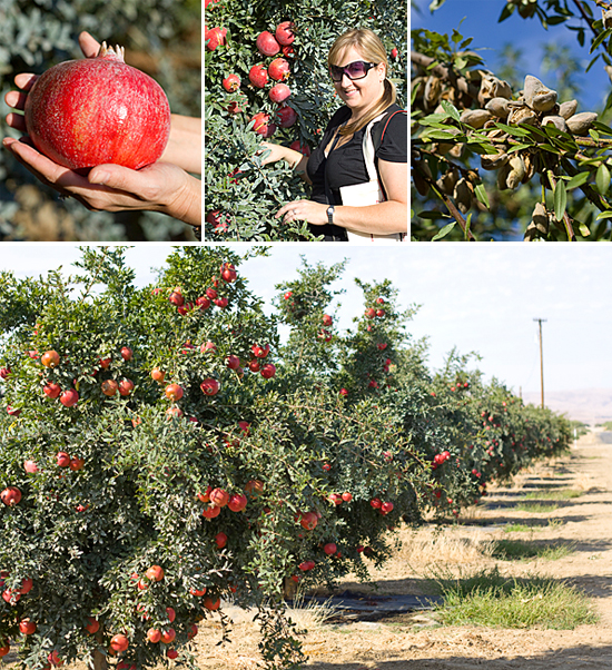 Visiting the pomegranate orchards and almond orchards