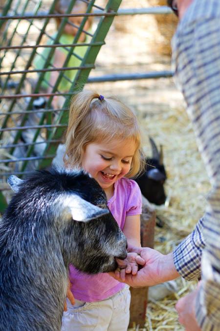 Bug feeding a goat