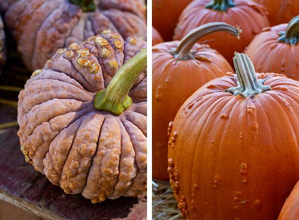 Knobbly Pumpkins