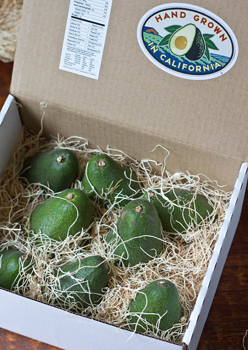 California Avoacdos Direct Avocados