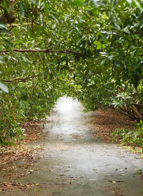 Magical avocado grove light