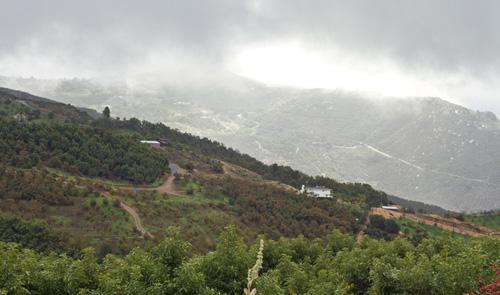 Rainy morning in Avocado Country