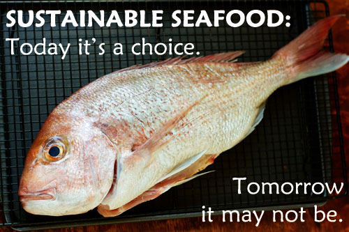 sustainable seafood a call to action la fuji mama