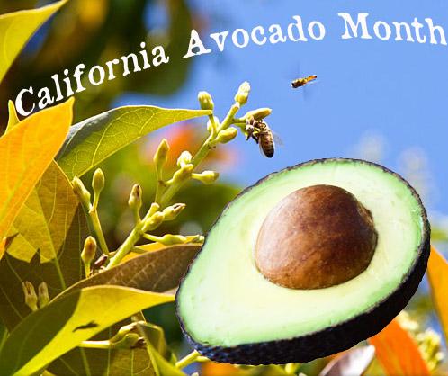 California Avocado Month
