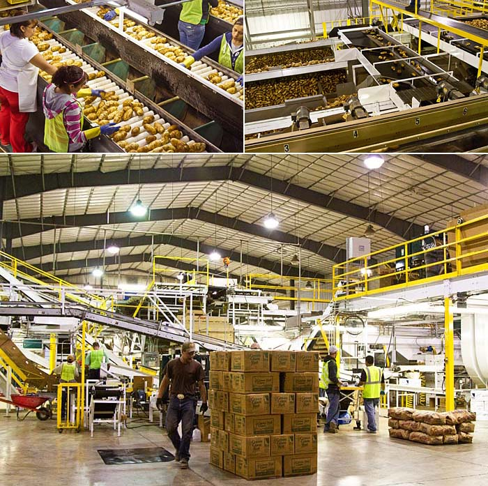 Wilcox Fresh packing and storage facility