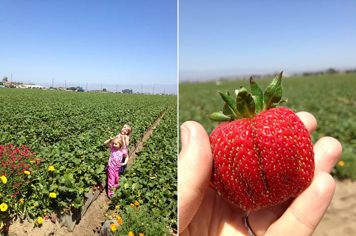 A Day with California Strawberries