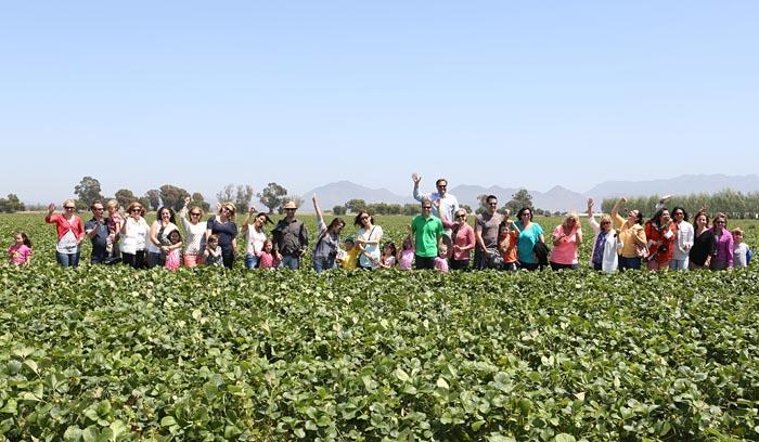 I Heart CA Strawberries Field Trip Bloggers