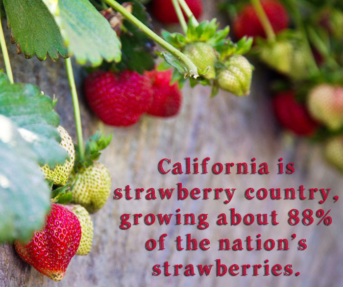 California is strawberry country