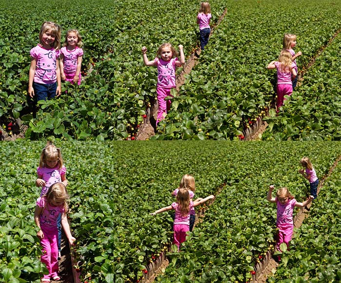 Exploring the strawberry fields