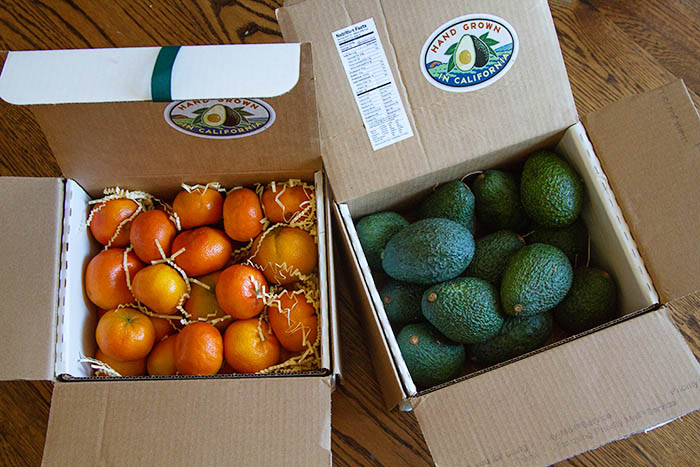 Tango Mandarin Oranges and Avocados from California Avocados Direct