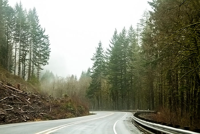 Driving through the Tillamook State Forest
