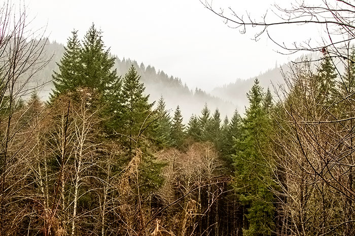 Enjoying the beautiful Tillamook State Forest
