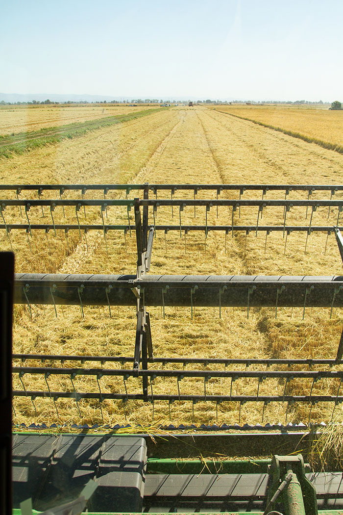 View from a combine