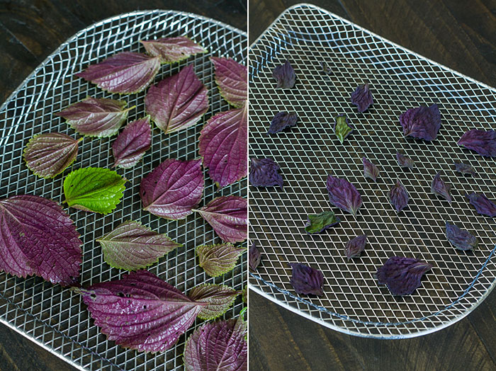 Dehydrating shiso leaves